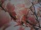 Galeria magnolia w Trzebnicy